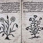Medieval Herbal Medicine Book