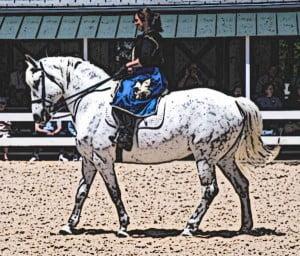 Destier-War-Horse-Spanish-Norman